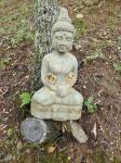 Buddha wasp nests 13 Feb 15